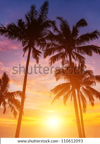 palm trees on the background of