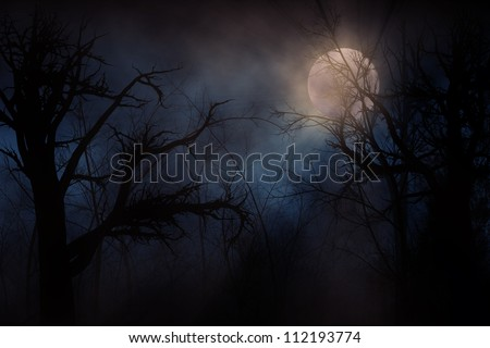 illustration of night forest
