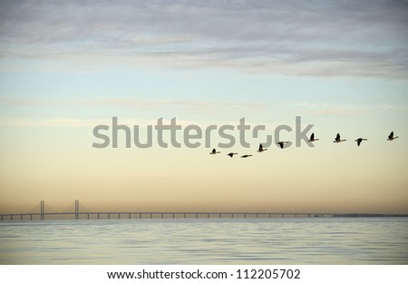 flock of birds flying near