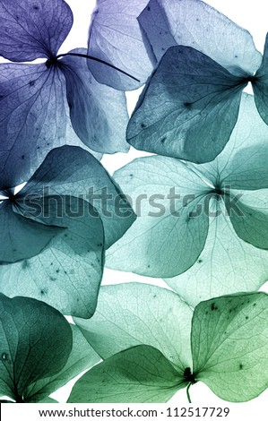 colorful flower petal