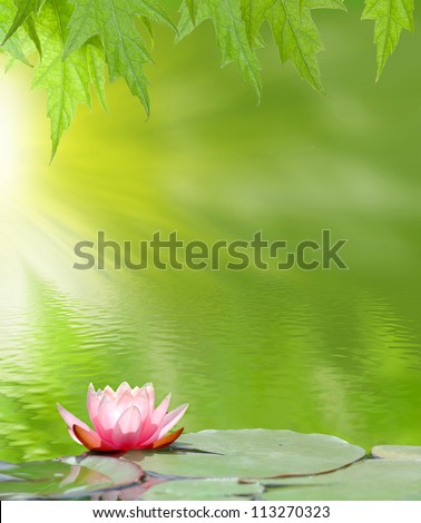 image of a lotus on the water