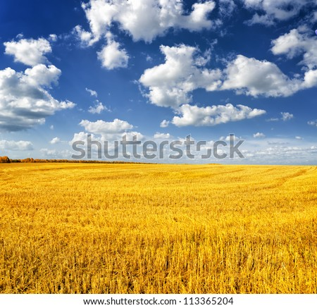 autumn landscape yellow field