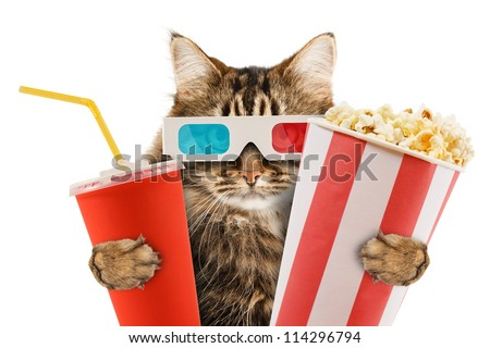 cat watching a movie