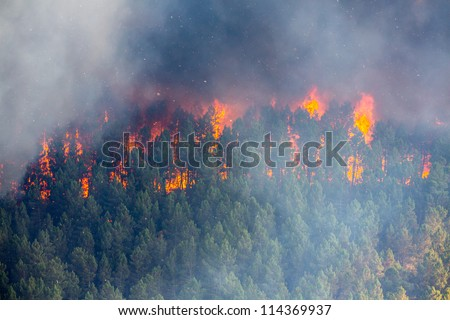 raging pine tree fire across