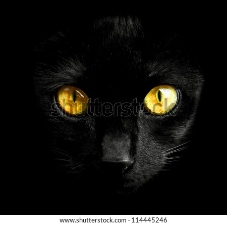black cat in dark close up