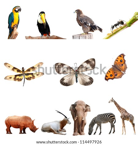 real animal collection isolated