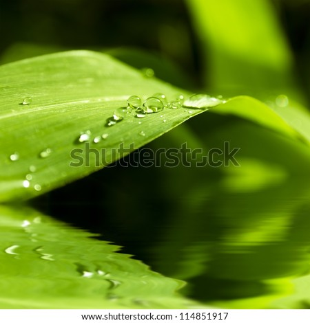 close up of a leaf and water