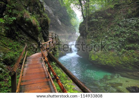 river in green forest in canyon