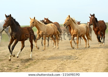 herd of hurrying horse on the