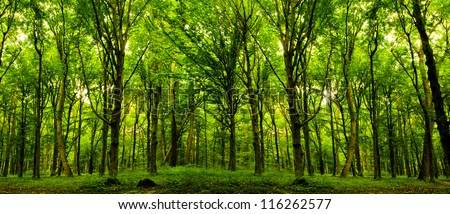 forest trees nature green wood