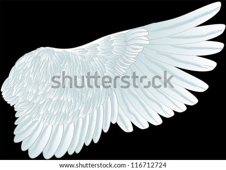 white wing isolated on th black