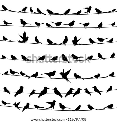 set of birds on wires a vector