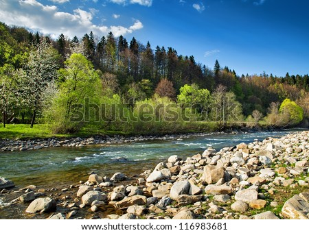 landscape with forest  river