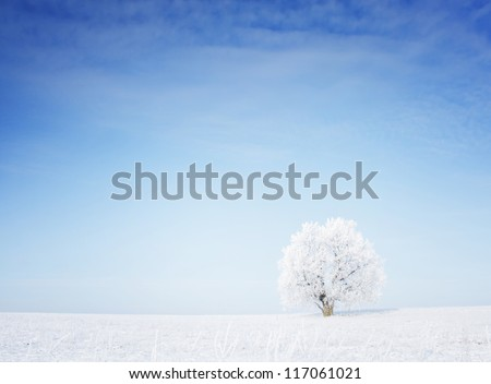 winter tree in a field with