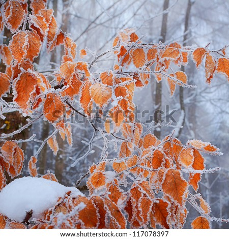 frozen autumn leaves on the
