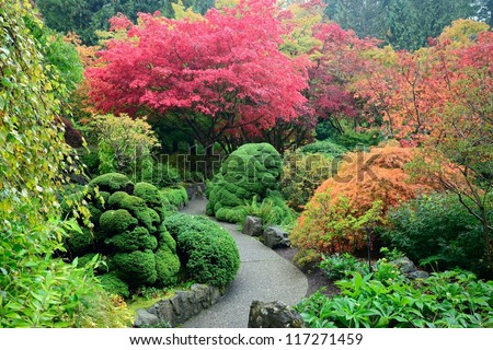 colors of japanese maples in