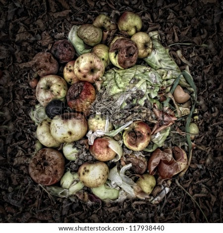 rotting apples on a compost