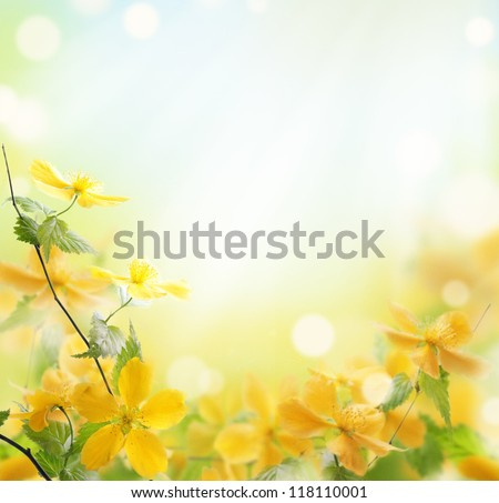 closeup of beautiful yellow