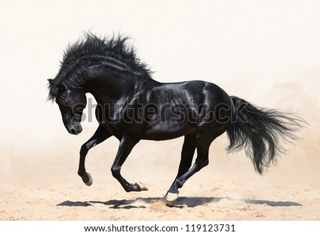 black stallion in motion on