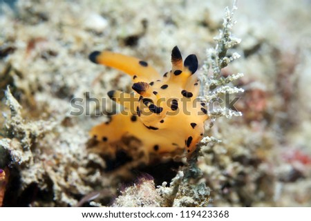 sea slug close up