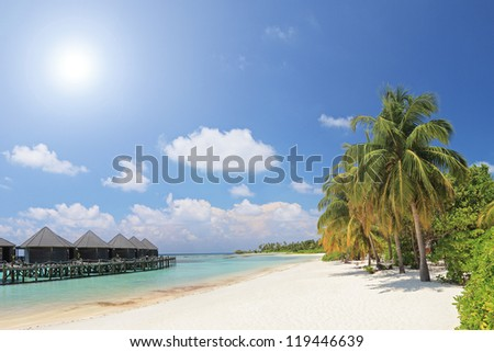 scene of sandy beach with palm