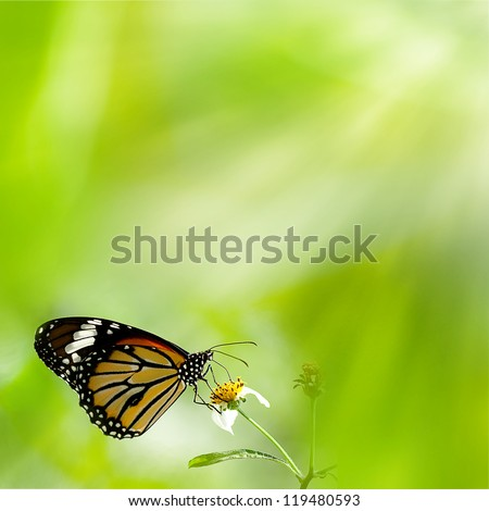 brilliant swallowtail butterfly
