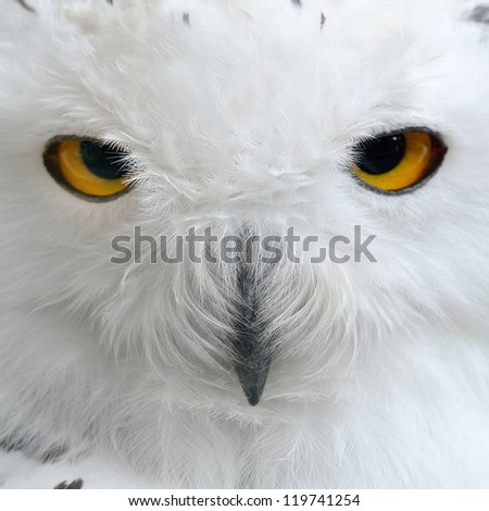 white polar owl sitting on a