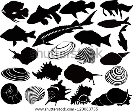 shell of a snail fish vector