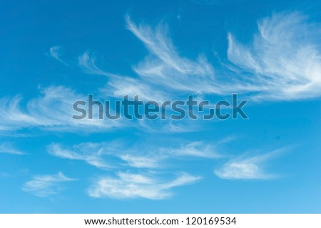 natural background view of the