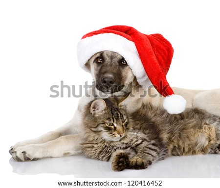 cat and dog with santa claus