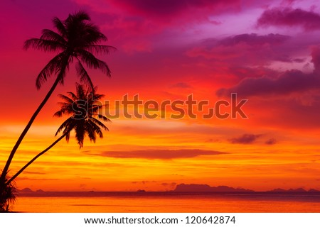 two palm trees silhouette on