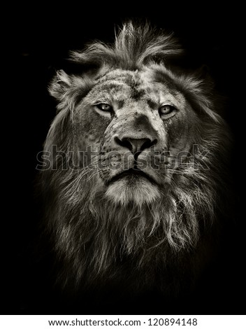 graphic black and white lion
