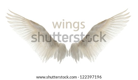 natural white goose wings