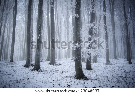 cold weather in forest in winter