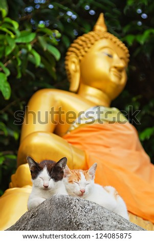 two kittens meditate with buddha