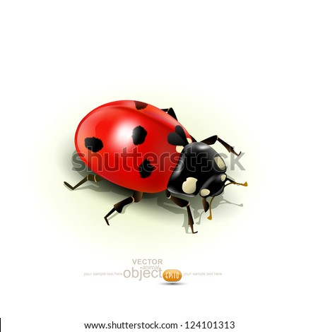 vector ladybug  isolated on
