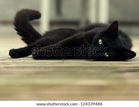 beautiful black cat with green