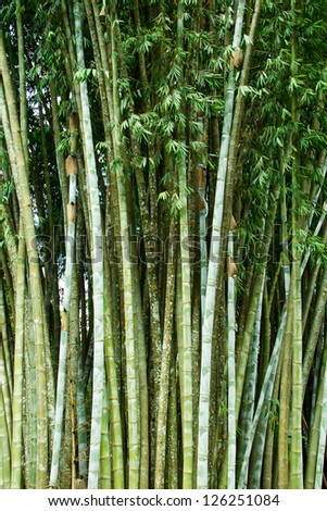 bamboo grove at bhu bhing palace