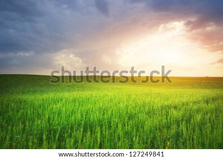 green meadow and sunlight