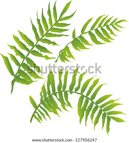 Fern Pictures Free Fern Plant Free Vector