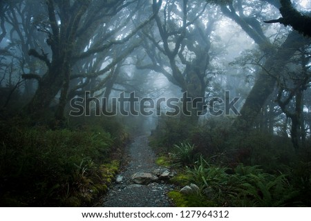 foggy forest at routeburn track