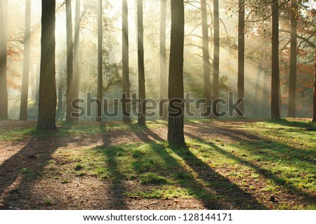 beautiful sun rays in the