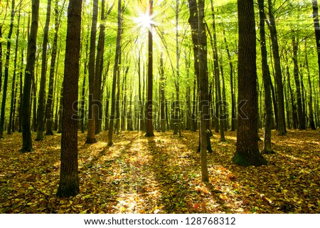 autumn forest trees nature