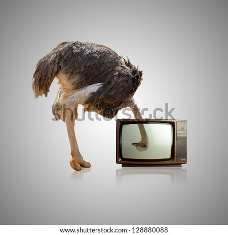 ostrich looking through