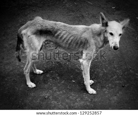 starving dog on the slope of