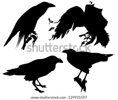 raven birds detailed vector