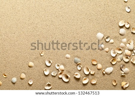 sea shells on sand summer