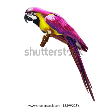 pink parrot  colorful parrot