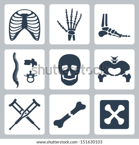 vector isolated skeleton icons