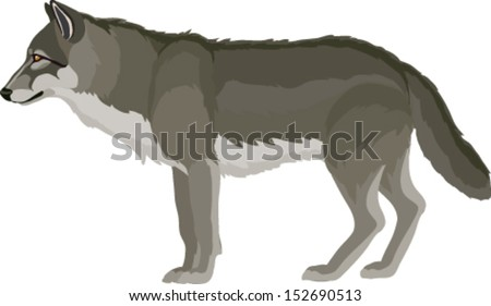 wolf drawn in vector art